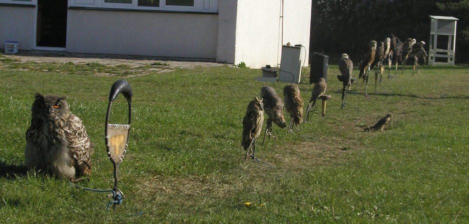 rada-ptaci